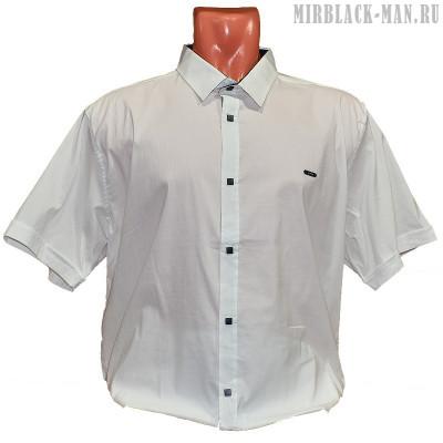 Рубашка белая AMATO 6933
