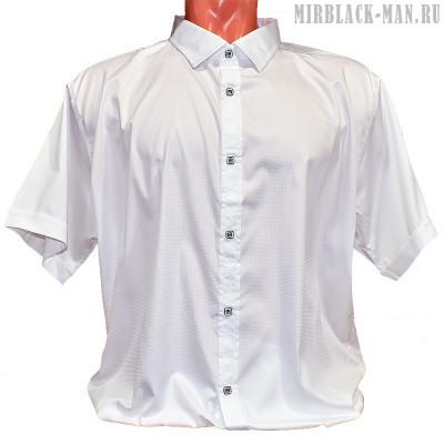 Рубашка белая AMATO 0734