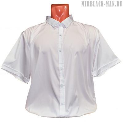 Рубашка белая AMATO 8145-2
