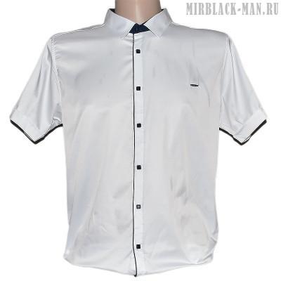 Рубашка белая AMATO 8144